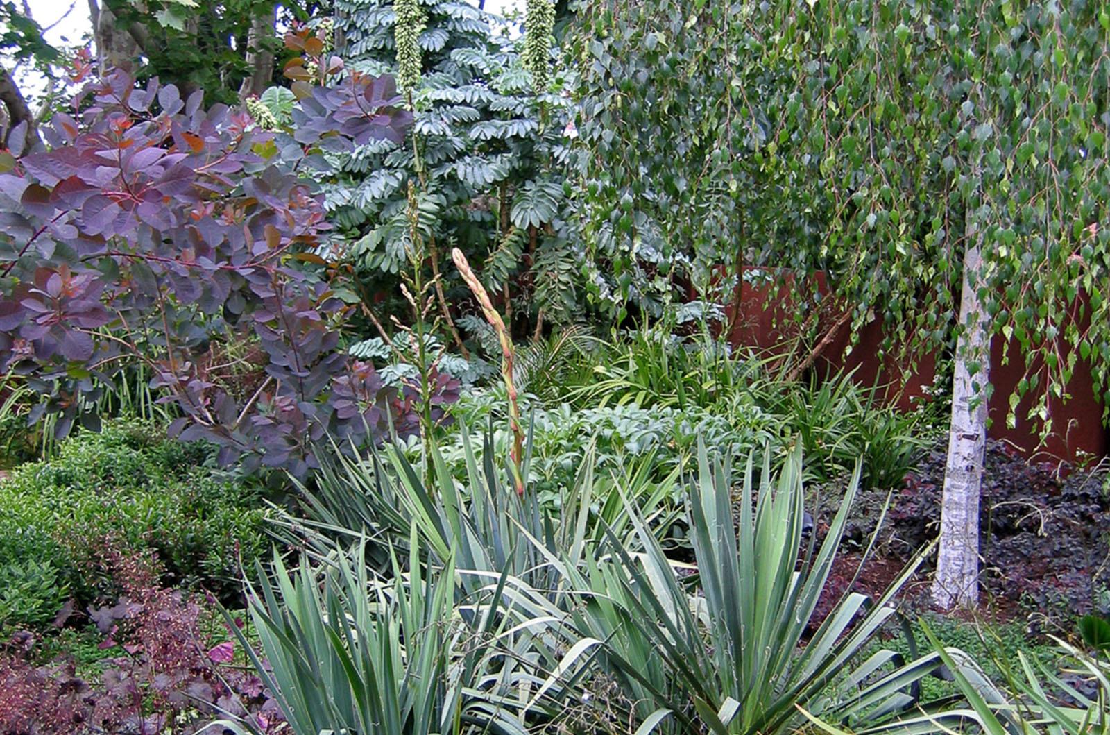 Front Garden_0007s_0000_Wyles-10