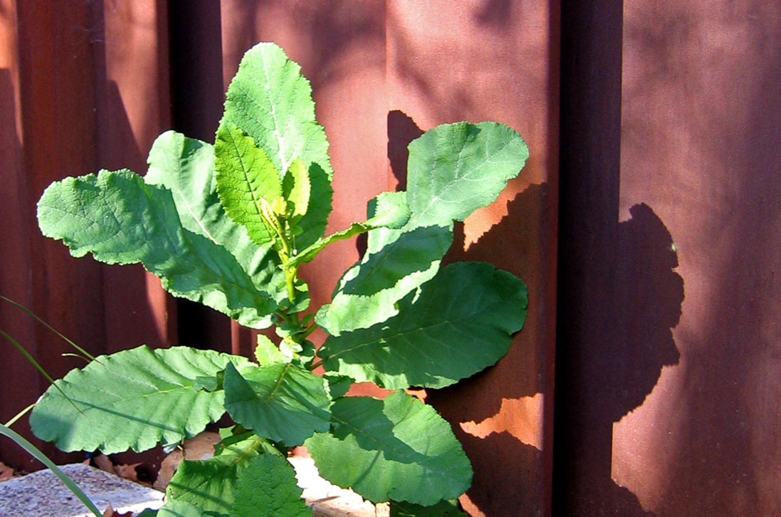 Front Garden_0007s_0001_Wyles-3